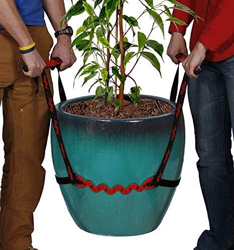 جابجایی گل و گیاه در اسباب کشی
