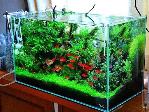 آماده سازی ماهی ها برای اسباب کشی