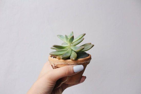 جابجایی گیاهان و گل های کوچک