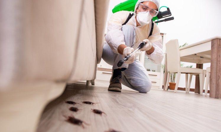 سم پاشی و از بین بردن حشرات موذی قبل از اسباب کشی