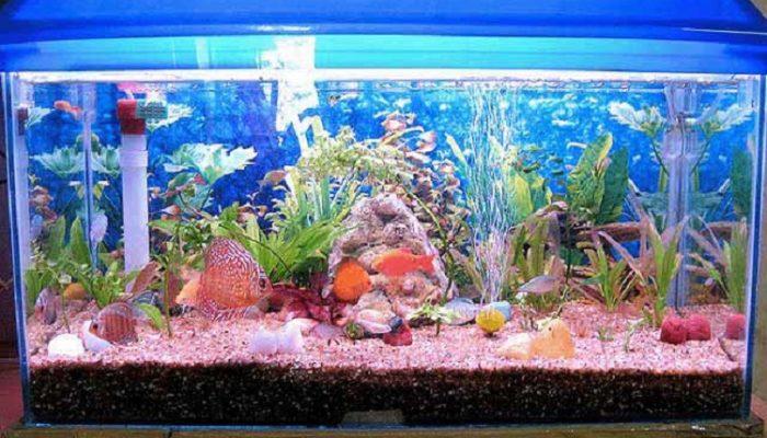 نحوه جابجایی آکواریوم ماهی در هنگام اسباب کشی