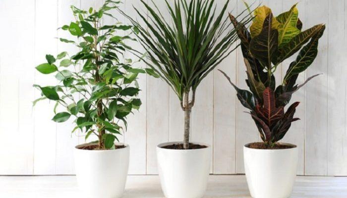 نحوه جابجایی گیاهان و گل ها هنگام اسباب کشی