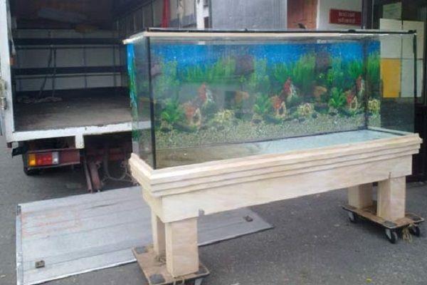 بهترین روش برای جابجایی آکواریوم ماهی
